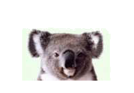 Koala FTD Search